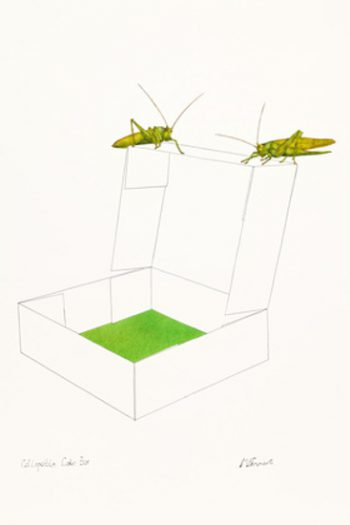 Michael Ferner, Collapsible Cake Box with Grasshopper